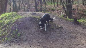 Meg with her trusty stick.