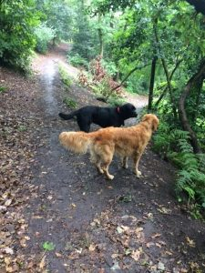 Jess and Toby on a holiday care walk.