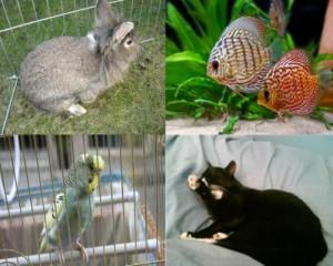 small-animal-visits-300x240